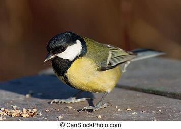 sikora, ptak, na, przedimek określony przed rzeczownikami, nakarmić, miejsce