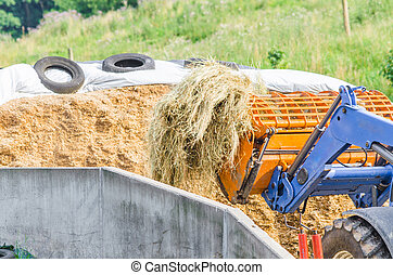 Silage compacted well in the absence of air with white...