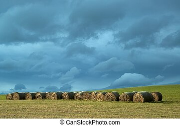Silage in meadow - Autumnal landscape silage in meadow