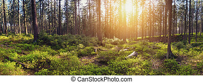 Silent Forest at sunrise with beautiful bright sunlight...