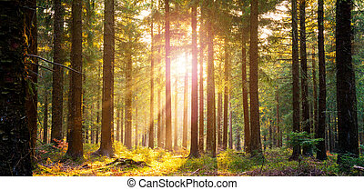 Silent Forest in spring with beautiful bright sun rays -...