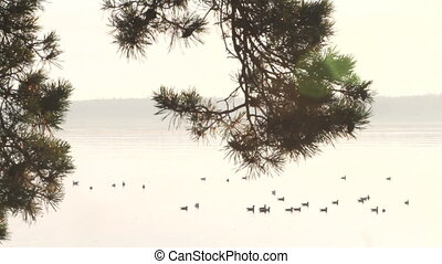 silent quiet sea, seagulls  bird, live tree pine