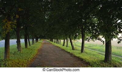Silent alley with trees for walking