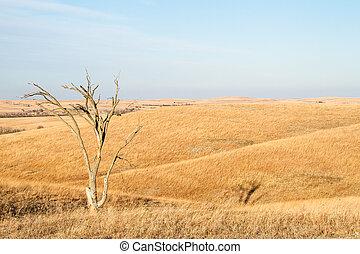 silex, arbre, kansas, solitaire, collines