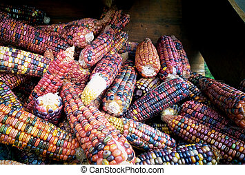 silex, maïs, multicolore, cob