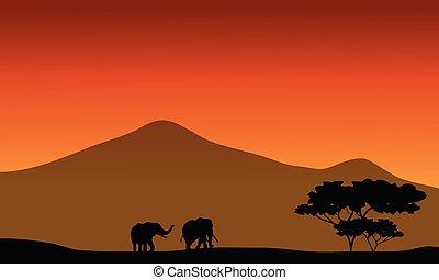 silhouete, campos, elefante
