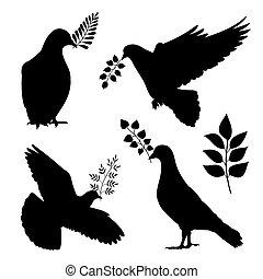 silhouetes., שלום, יונה, הפרד, וקטור, ענף, יונה