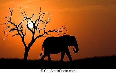 silhouette, éléphant