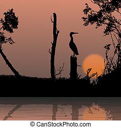 silhouette, aanzicht, van, vogel, op een tak, fauna