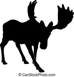 Silhouette adult moose
