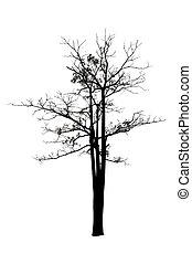 silhouette, albero, isolato