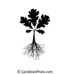 silhouette, albero quercia