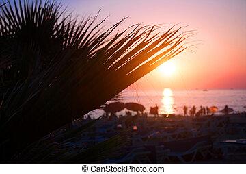 silhouette, albero, tropicale, palma, spiaggia tramonto