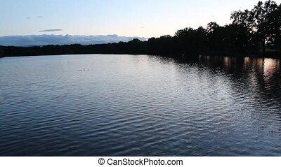 Silhouette Anas platyrhynchos on pond in sunset