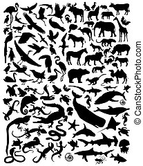 silhouette animals - vector black silhouette of wild animals...