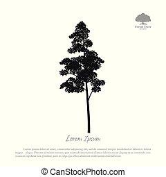 silhouette, arbre, arbres, arrière-plan., forêt noire, blanc
