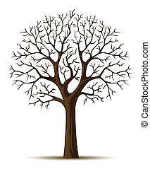 silhouette arbre, branches, cron