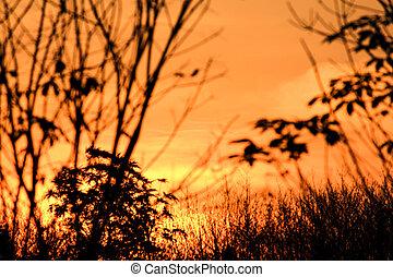 silhouette, arbre, ciel, caoutchouc, coucher soleil, rêve,...