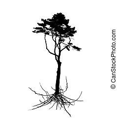 silhouette, arbre, système, isolé, arrière-plan., blanc, racine