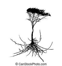 silhouette, arbre, système, isolé, arrière-plan., v, blanc, racine
