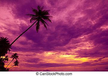silhouette, arbres, exotique, paume, plage coucher soleil
