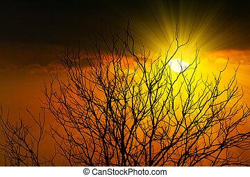 silhouette, astratto, albero, morto, tramonto, ramo, raggio sole