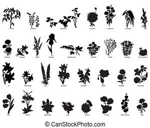 silhouette, bacche, fiori