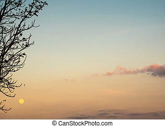 silhouette, baum, und, der, vollmond, in, der, abend, himmelsgewölbe