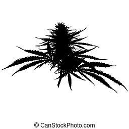 silhouette, bekend, hashish., medisch, marihuana, ook, plant, knop, cannabis