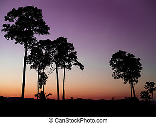 Silhouette big trees in the evening twilight sunset sky