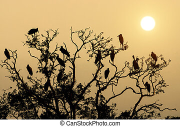 Silhouette bird on branch