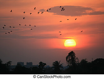 Silhouette birds flying at sunset