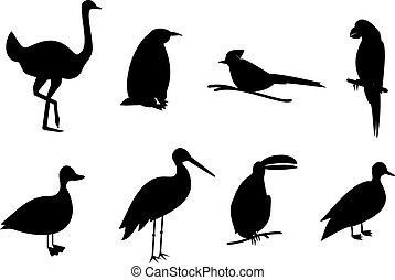 silhouette birds vector set