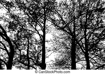 Silhouette black trees against a white background