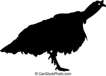 Silhouette black turkey on a white background