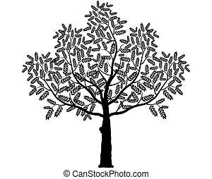 silhouette, bladeren, boompje, achtergrond., vector, black , witte