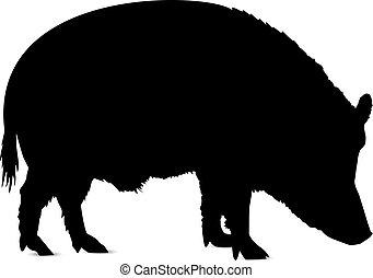 silhouette, boar.