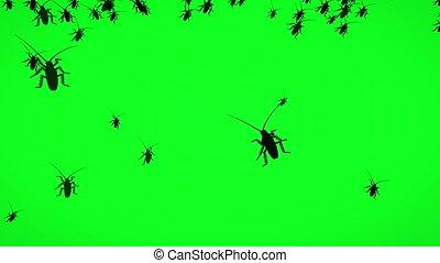 silhouette, bogues, animé, écran, vert