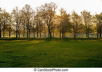 silhouette, bomen, gree, park., door, lijn, zonopkomst