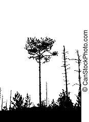 silhouette, boompje, illustratie, achtergrond, vector, witte