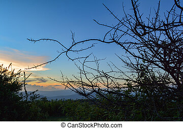 Silhouette branch Acacia thorn tree bush with Sunrise Cloud blue sky background