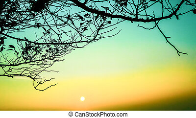 Silhouette branch on Sunrise with blue and yellow sky