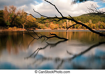 Silhouette branches in the lake and trees on the background....