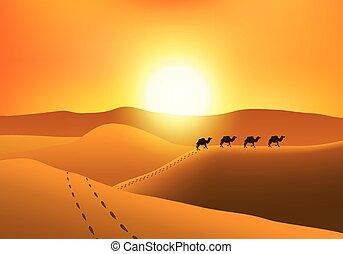 silhouette, cammelli, deserto, sunset., marcher