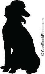 silhouette, caniche
