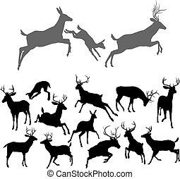 silhouette, cervo