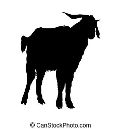 silhouette, chèvre