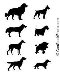silhouette, chiens