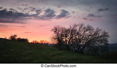 silhouette, cielo, albero, contro, alba