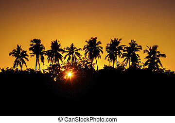 Silhouette coconut palm trees at sunset